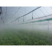 Туманообразование